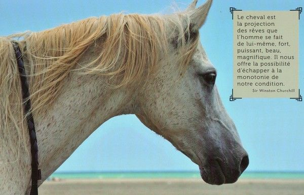 Citation et photo de cheval