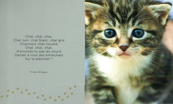 Chat infidele