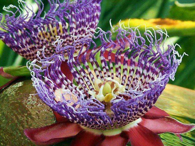 Magnifiques Fleurs Rares Choisies