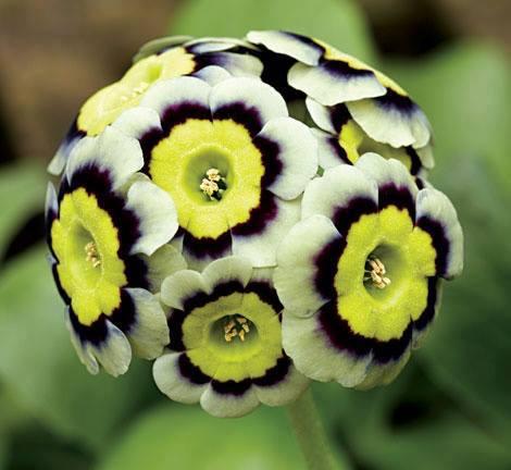 fleur,rare,16. «