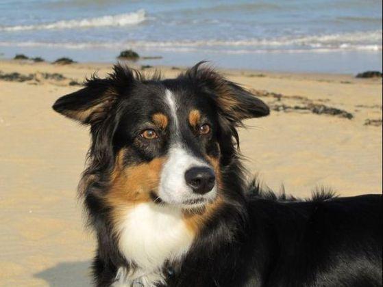 Les plages autoris es aux chiens en 2015 for Hotels qui acceptent les chiens