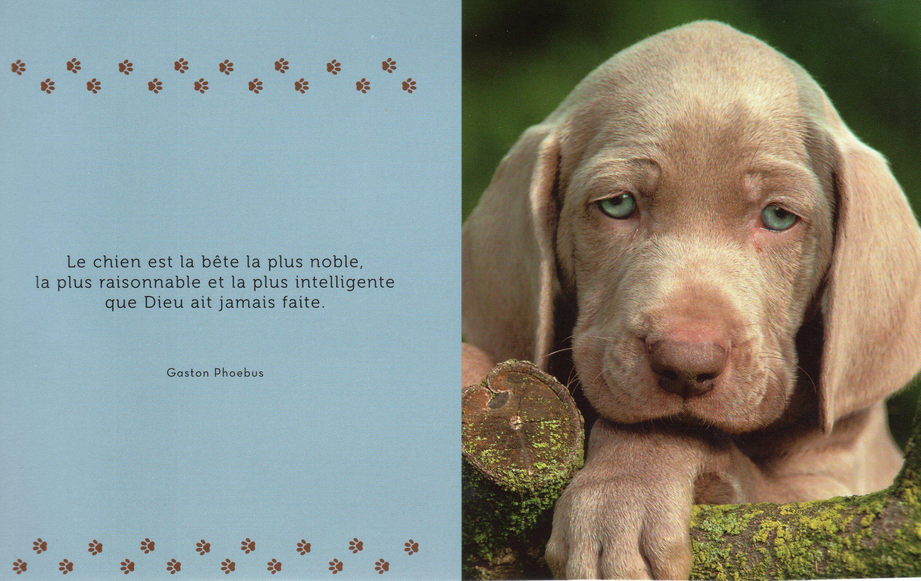Photo et citation de chien 3