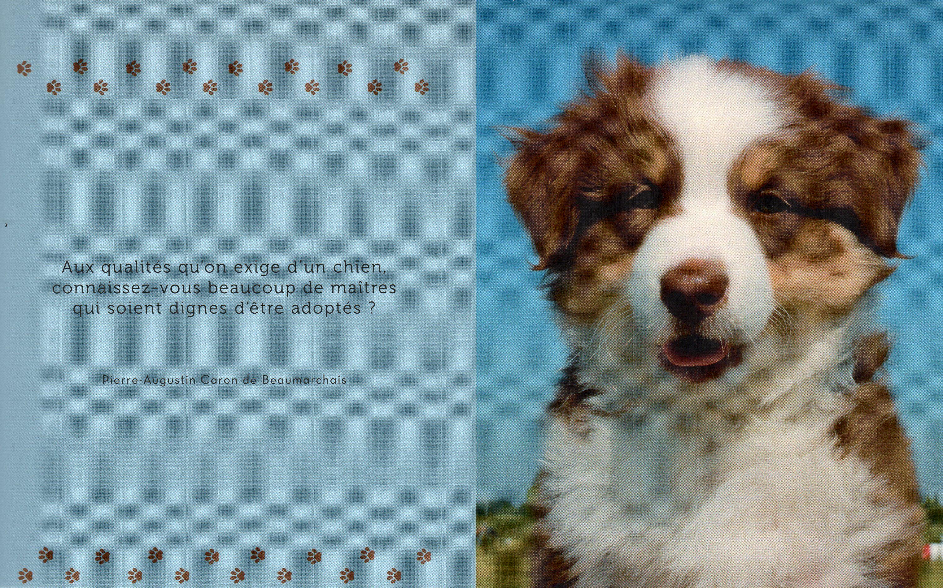 Citation et photo de chien 52 - Cuisiner pour son chien ...