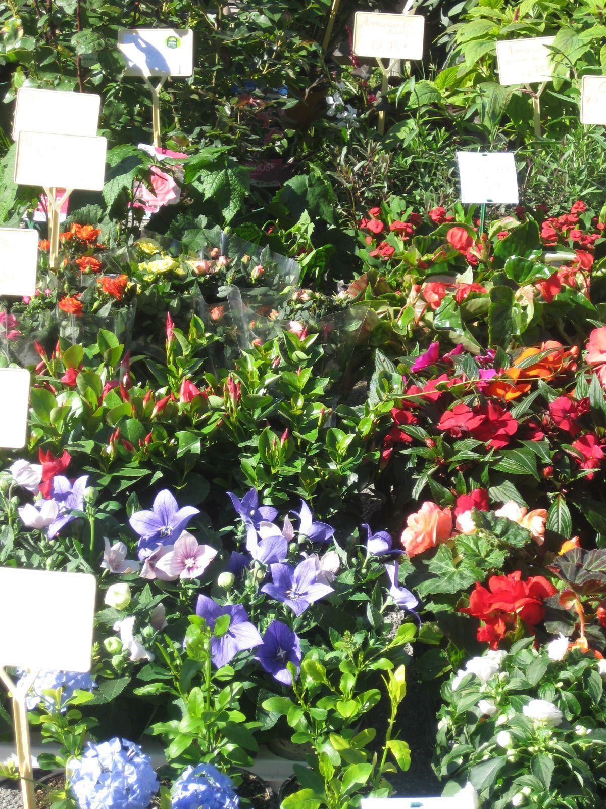 Le march des plants 1 les fleurs espinasses 05 for Www jardiner malin fr