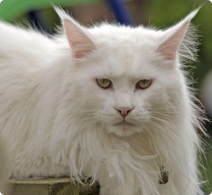 citation et photo de chats
