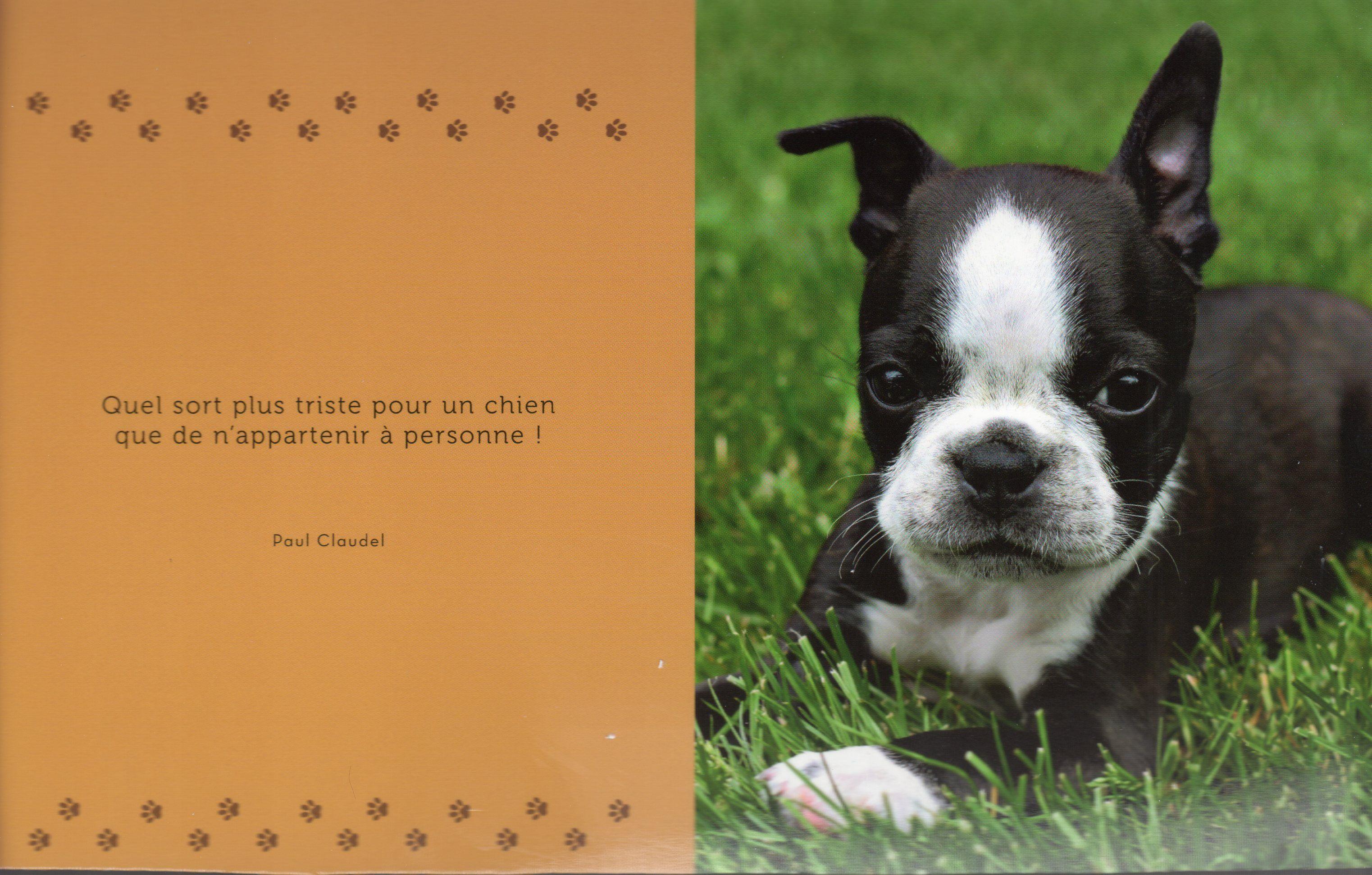 citation anniversaire chien